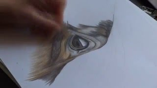 Drawing a horse - Speed Painting Tutorial by Kathi-Arts
