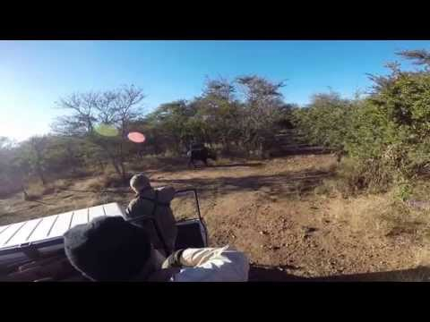 Cape Buffalo Charges Truck!