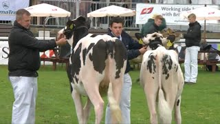 Parau'r Gwartheg Godro | Dairy Pairs