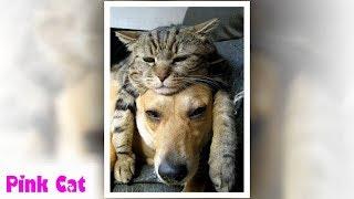 """Top những hình ảnh """" Mèo nằm lên Chó """" thật là đáng ghét đến ghê gớm"""