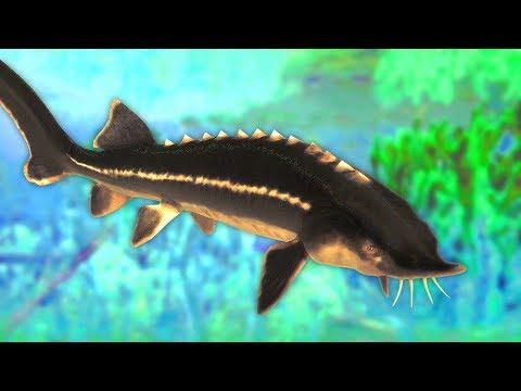 Catching Huge Prehistoric Dinosaur Fish In The Fisherman Fishing Planet