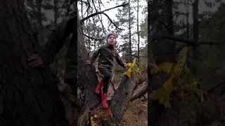Привет из осеннего леса