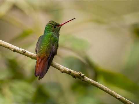 V31CQ Belize. From dxnews.com