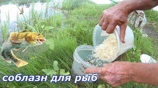 Соблазн для рыбы.Домашняя прикормка для рыбалки своими руками.Рассыпчатая пшенная каша на воде