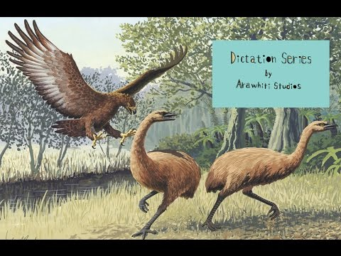 Dictation Series - Episode 31: Haast eagle and moa