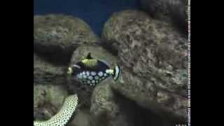 эксклюзивные рыбки в аквариуме
