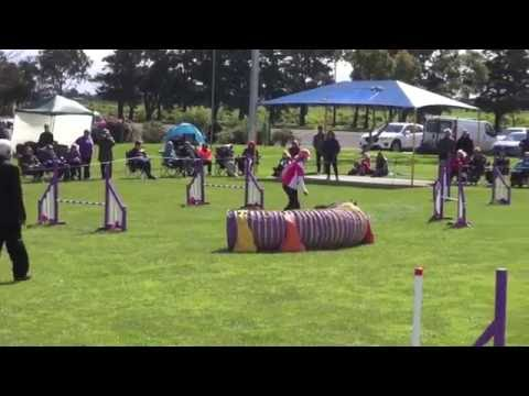 Top Jumping Dog 2016