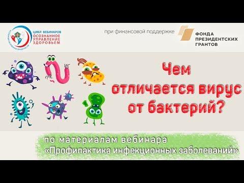 Чем отличается вирус от бактерий?