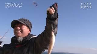 【釣りたいっ!】 #156 金沢八景・シロギス釣り!【2019年3月号】