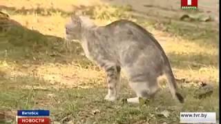 В Витебске выявлен случай бешенства у домашнего животного