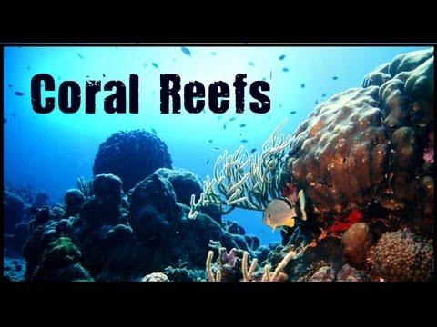 Coral Reefs Biome - Untamed Science