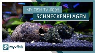 Schneckenplage - was tun? | Wenn die Schnecken dein Aquarium übernehmen | my-fish TV
