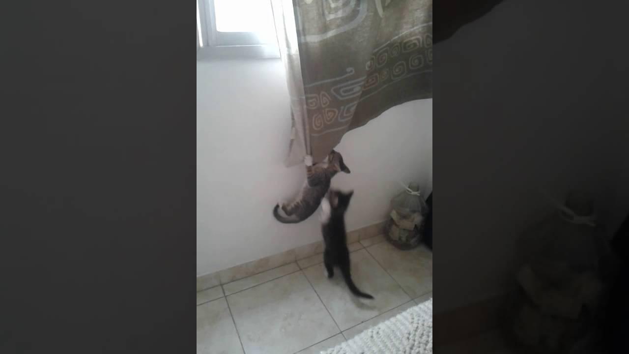 Gato colgado de cortina youtube - Cortinas el gato preto ...