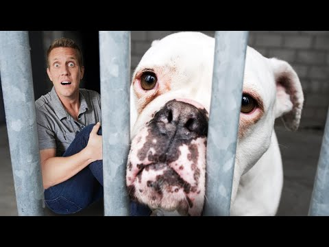 Spending 24 Hours in a Dog Shelter! Challenge