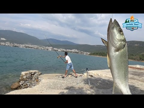 Bu Merada Her Çeşit Balık Var.!! Lüfer, Levrek, Çupra ve Antenli ;) - 01 Haziran 2018
