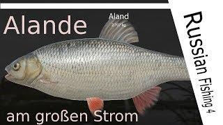 Russian Fishing 4 - #59 - Alande am Großen Strom