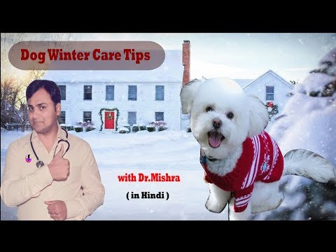 Dog/Puppy winter care tips in Hindi with Dr.Mishra
