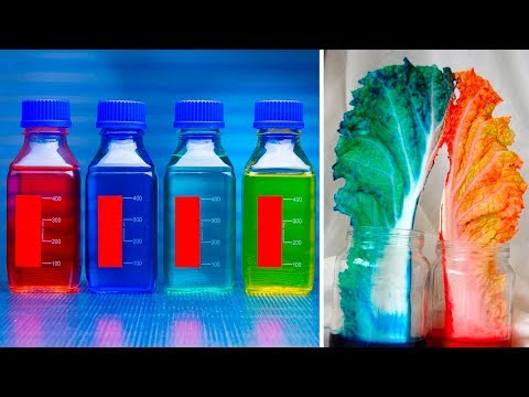The 5 Worst Artificial Food Additives And How To Eliminate Them