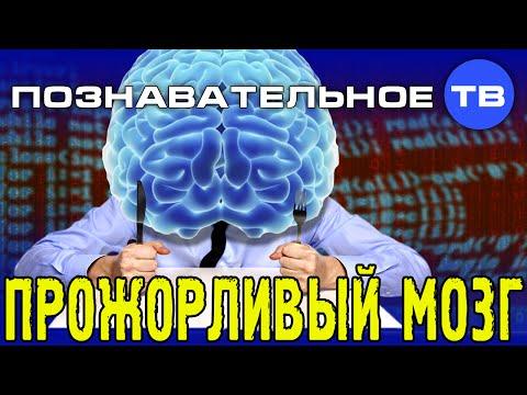 Прожорливый мозг (Познавательное