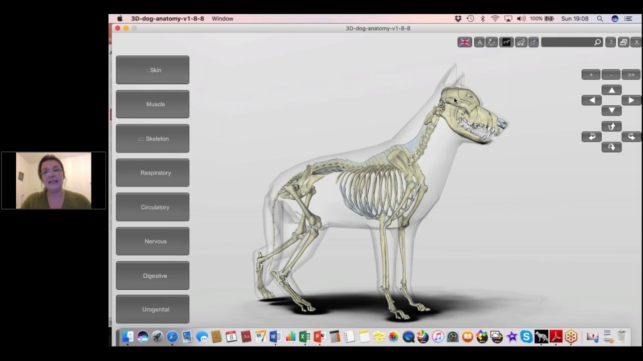 Exploring The Canine Skeletal And Muscular System With Carole