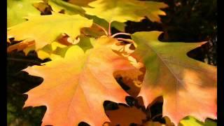 Золотые листики (автор клипа Ермакова Александра Сергеевна, г.Ковров)