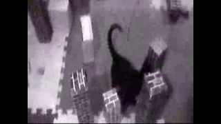 Catzilla, King of the Felines! (巨大な猫/Kyodaina neko) trailer 2