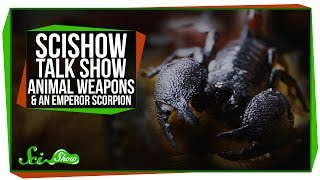SciShow Talk Show: More about Animal Weapons with Doug Emlen & Professor Claw the Emperor Scorpion