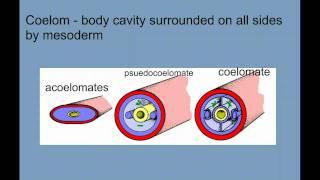 Invertebrate Diversity Part 1 - Porifera to Annelids