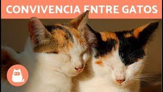Convivencia entre gatos 🐱 | Suara Fundation