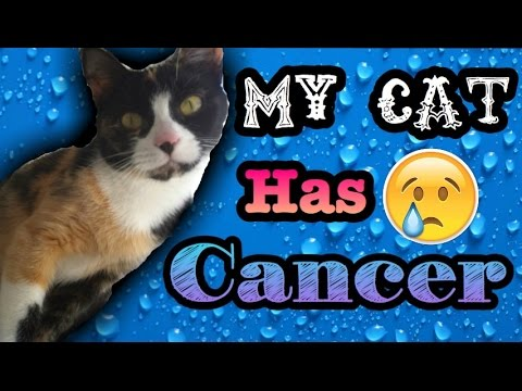 My Cat Has Cancer