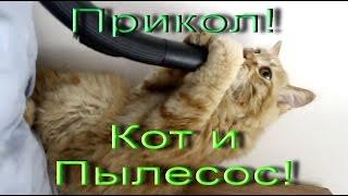 Новые видео приколы про кошек! Кот и пылесос!