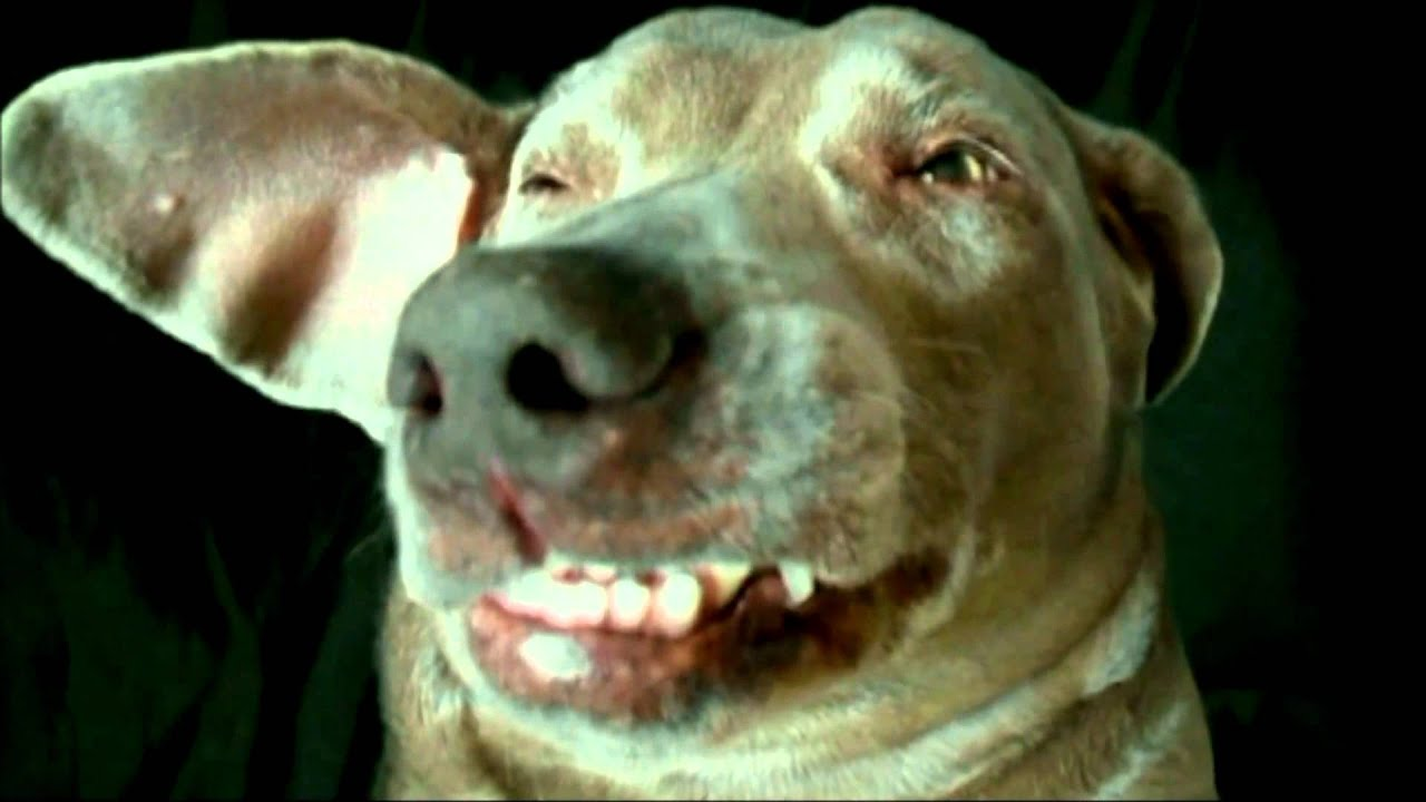 Funny Dogs Videos Best of Super Britney the worlds ...