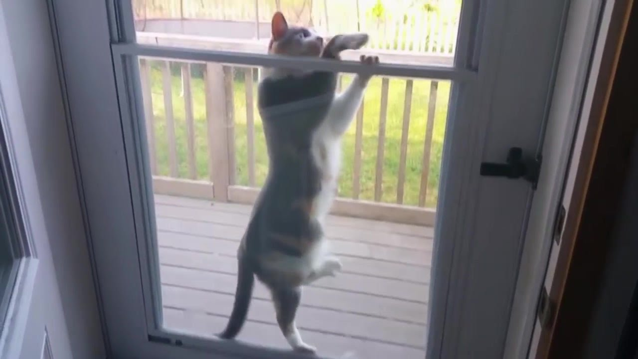 Cat Stuck In Screen Door