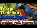 Terapi Tledekan Macet Bunyi Dengan Audio Brainwave Ampuhh Terapitledekanmacet Gratis(.mp3 .mp4) Mp3 - Mp4 Download