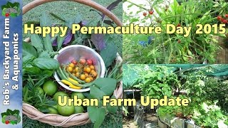 Urban Farm Update.. Happy Permaculture day 2015..
