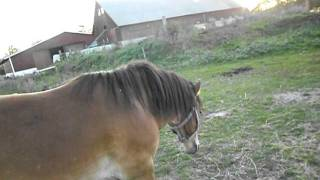 Ny ponny i hagen