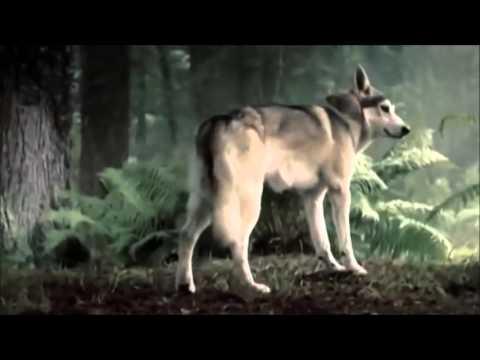 Game Of Thrones - House Stark - Direwolves - I Bet My Life