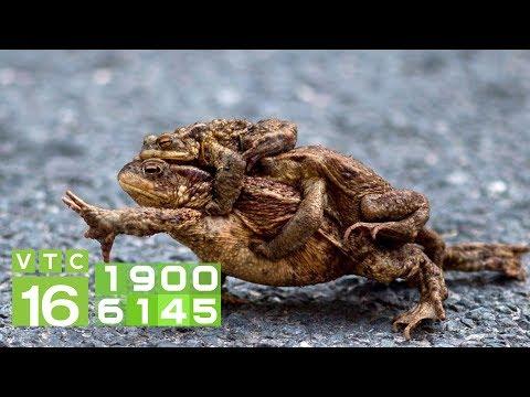Mẹo nuôi ếch khỏe mạnh mà không cần dùng đến kháng sinh