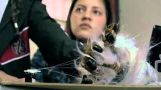 Robarte: de cómo la robótica le roba estudiantes a la desesperanza