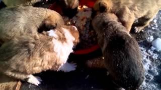 Отдам щенков в хорошие и добрые руки!!!)
