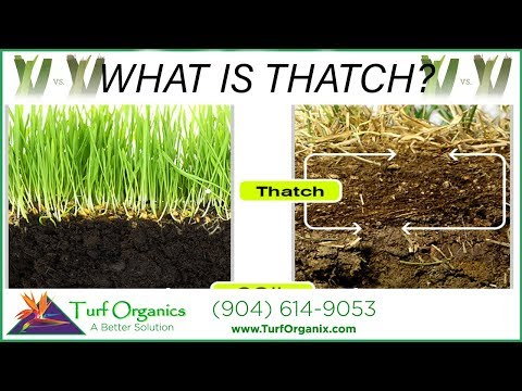 What Is Thatch In Your Lawn Youtube
