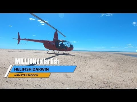 Helifish Darwin For The Million Dollar Fish | NT Dreaming