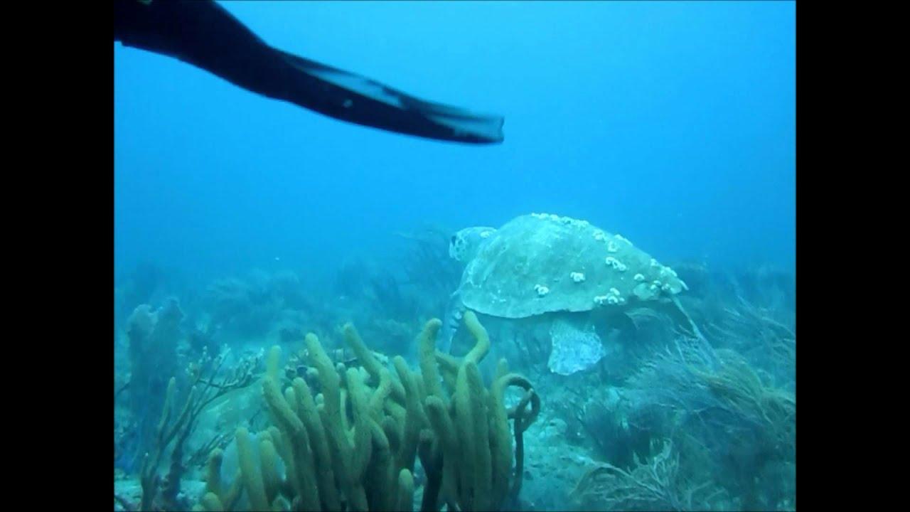 Drift dive west palm beach narcosis youtube drift dive west palm beach narcosis xflitez Images