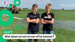 Boeren in Friesland worden gek van muizenplaag