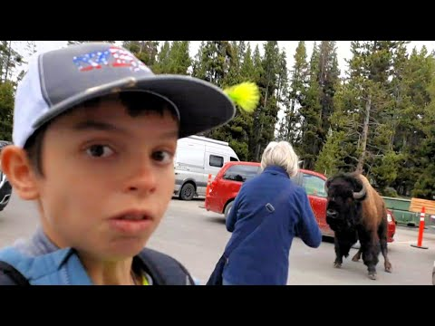 That was too close!! (Yellowstone Bison Attack)