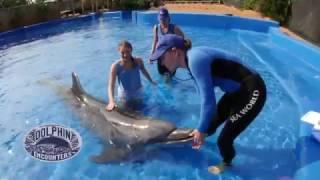 uShaka Sea Animal Encounters