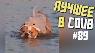 Лучшие приколы в COUB / #89 / Королева СосУль