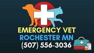 Emergency Vet Rochester MN | 24 Hour vet rochester mn | (507) 556 3036