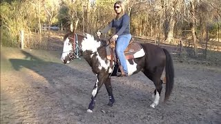How to do the first ride on a horse that hasn't been ridden in 1 year plus