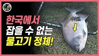 좌대낚시터 루어낚시 한국에서 절대 잡을 수 없는 물고기…